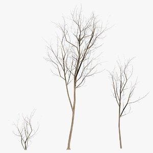 3D ready trees
