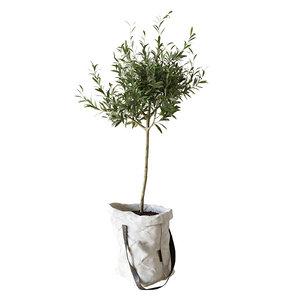 3D olive bag tree model