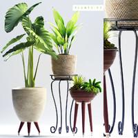 3D plant 97
