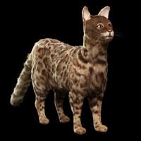 bengal cat 3D model