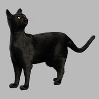 3D black cat fur