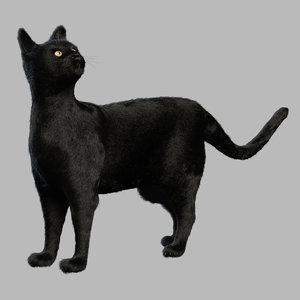 3D black cat fur