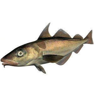 3D model realistic haddock