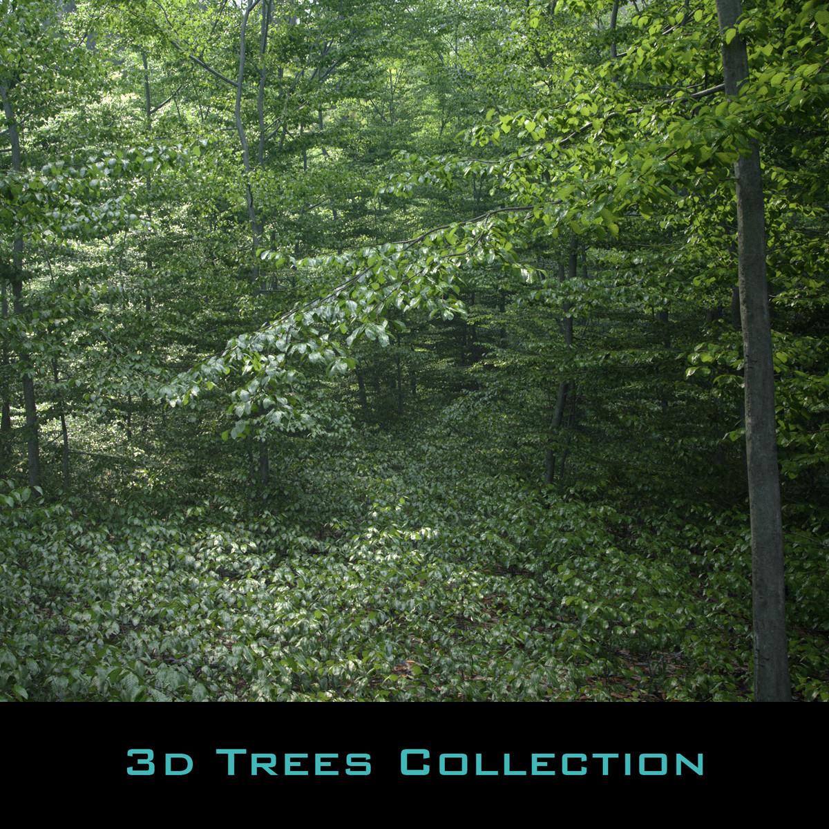 beech tree static 3D model
