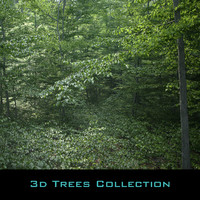 Beech Tree Collection (static)
