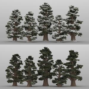 5 juniper trees 3D model