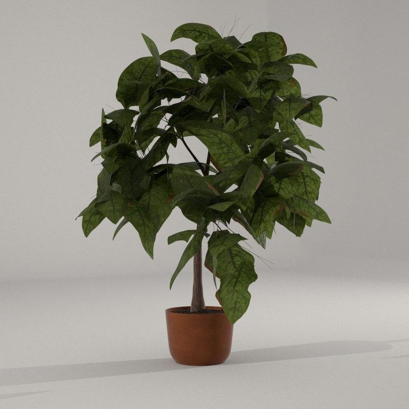 house plant model