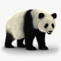 giant panda rigged bear fur 3D model
