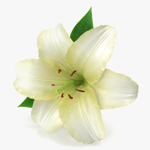 lily modeled petal model