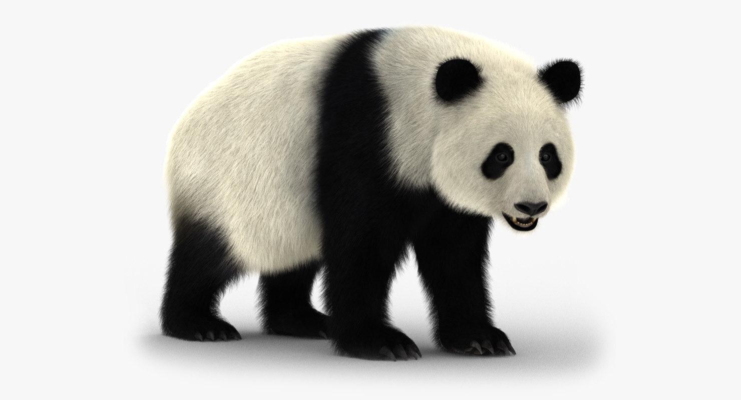 giant panda animation bear fur 3D