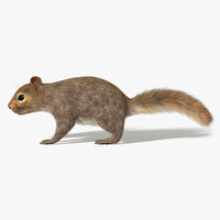 squirrel fur rigged 3D model