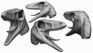 3D head sinosauropteryx prima model