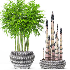 3D bamboo trees model