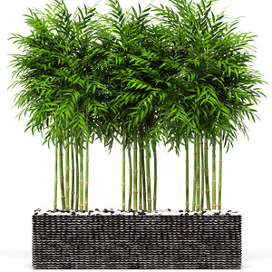bamboo trees 3D