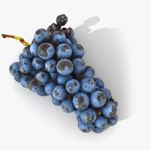 3D scan grape realistic