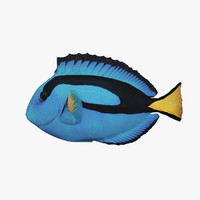 Paracanthurus Hepatus - Blue Tang - Low Poly (RC)