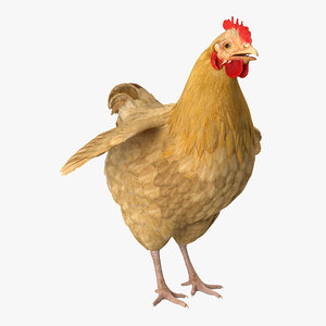 chicken realistic 3D model