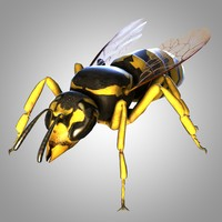 rigged wasp 3D model