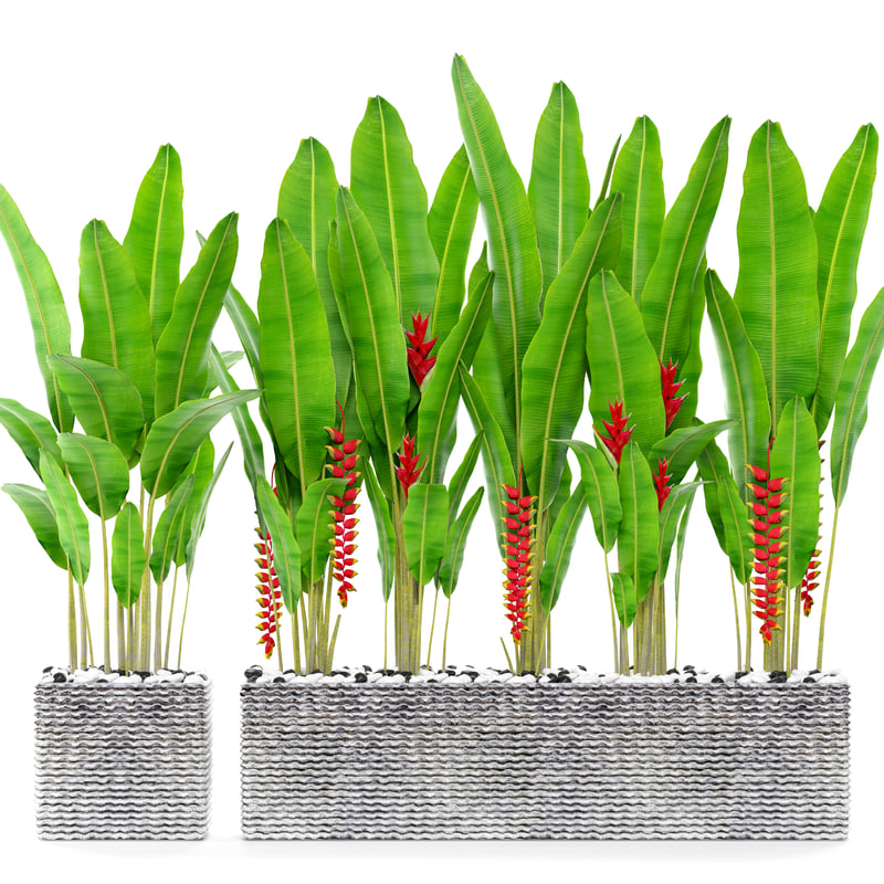 3D model heliconia pot