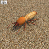 3D termite model