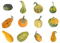 3D pumpkin 12