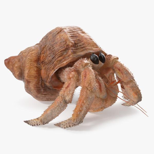hermit crab walking pose 3D