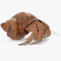 hermit crab walking pose model