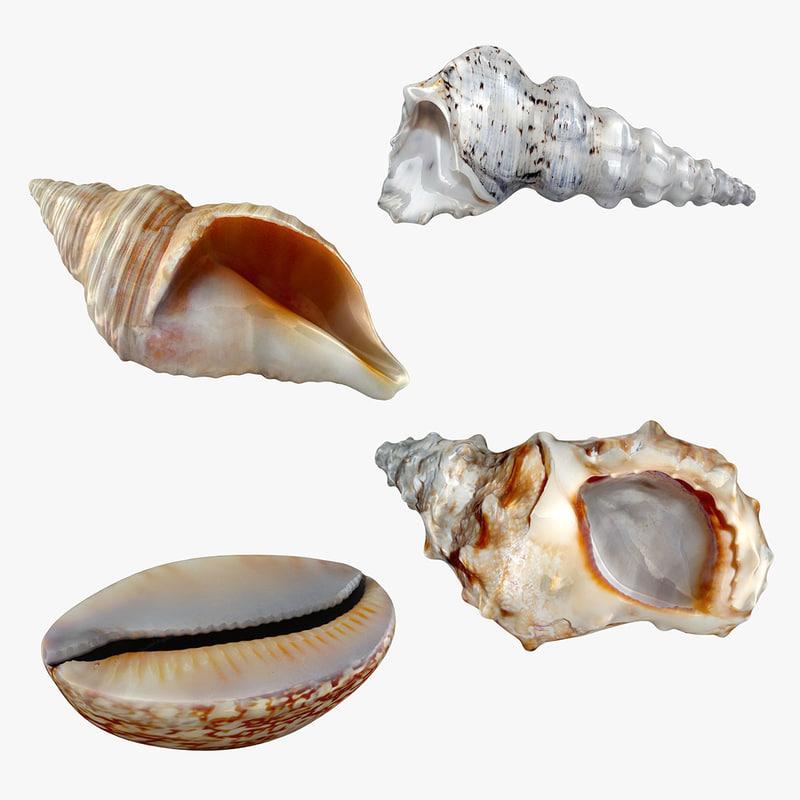 realistic sea shell set 3D model