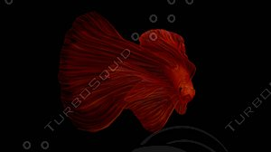 redfish fish 3D
