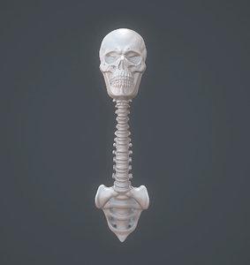 3D model spoon skull