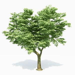 3D poplar tree model