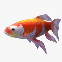 3D koi gold fish