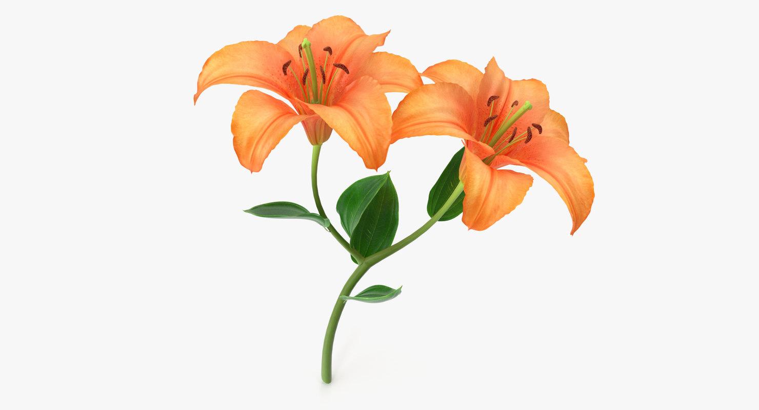 3D lily modeled petal model