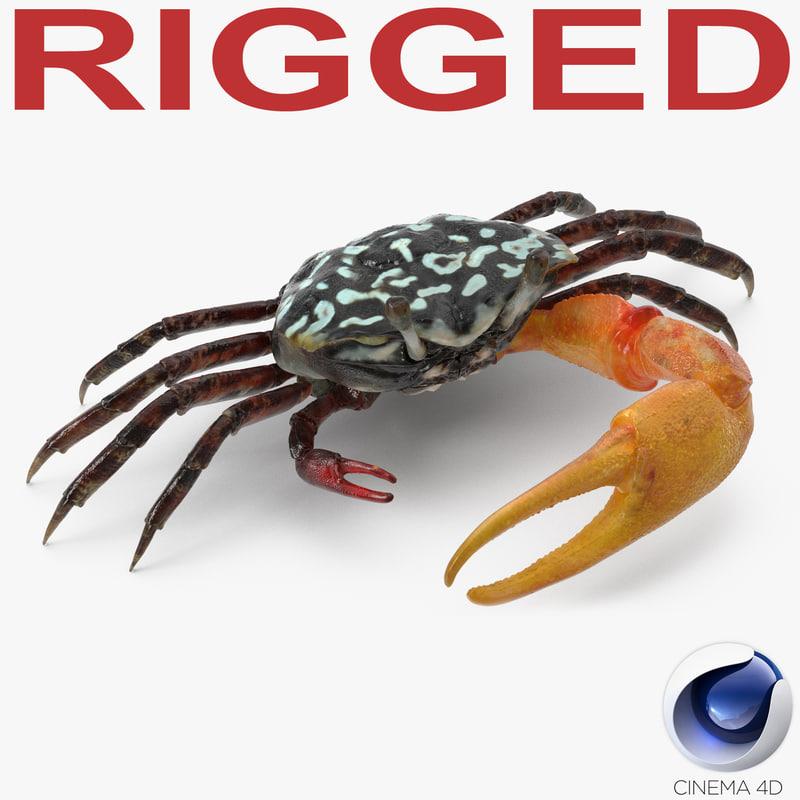 fiddler crab rigged 3D