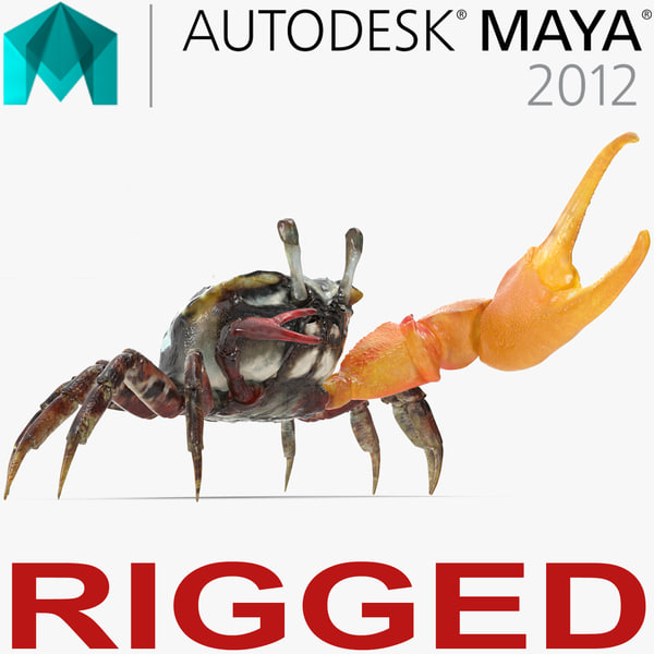 fiddler crab rigged 3D model