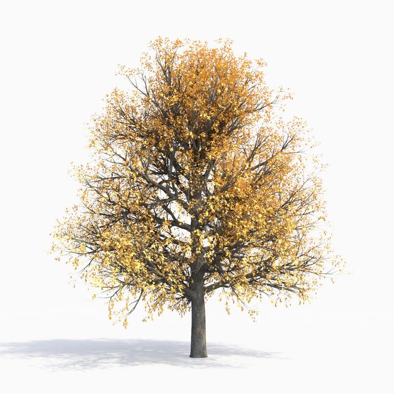 autumn oak 10m 3D