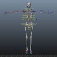 skeleton rigged 3D
