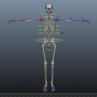 Skeleton Rig Maya