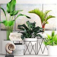 plants pot model
