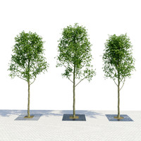 3D tree planter grate set