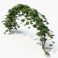 realistic ivy 3D model