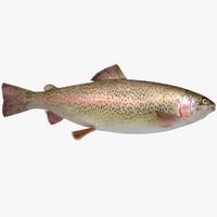 trout fish animation 3D model