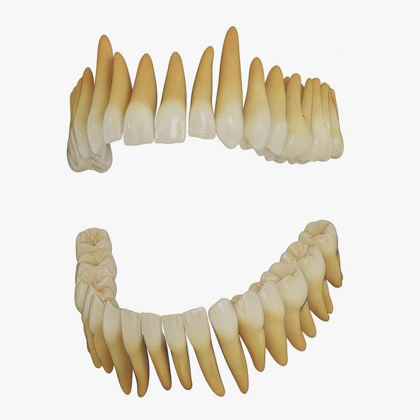 3D model realistic teeth