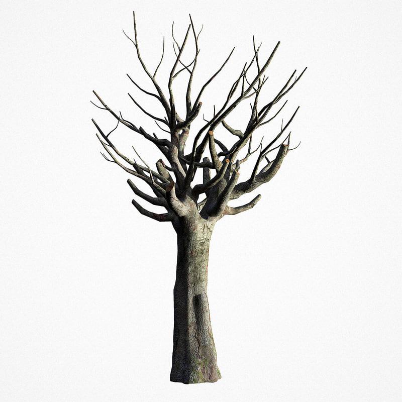 3D old tree