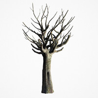 3D old tree
