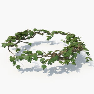 3D realistic ivy circle