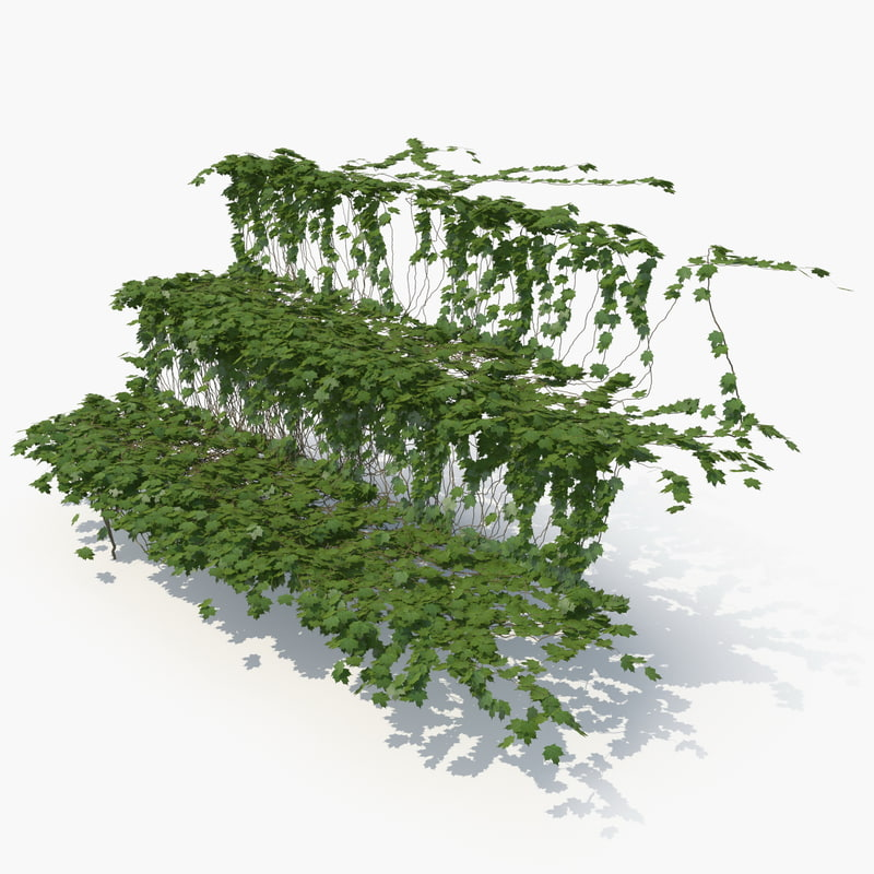 3D realistic ivy stairs