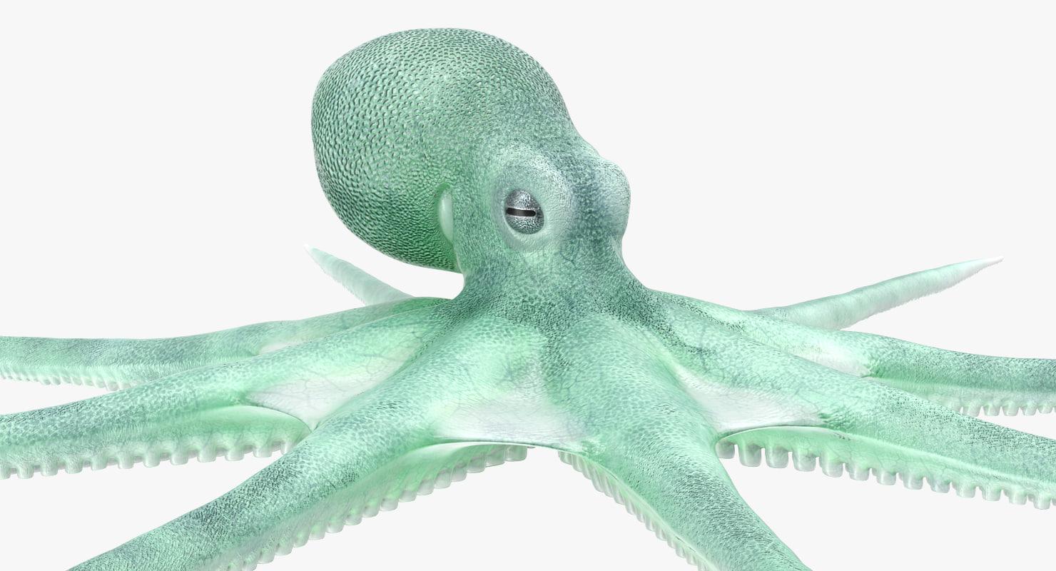 blue octopus 3D model