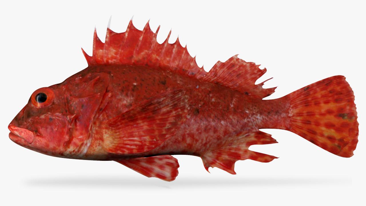 3D model peruvian scorpionfish