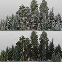 giant sequoia 3D models